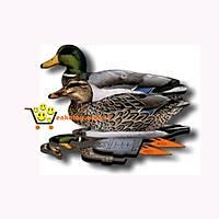Mühre Ördek - Mallard Ducks (3 Erkek-3 Diþi)