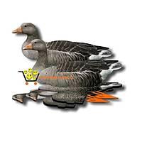 Mühre Kaz - Bean Goose