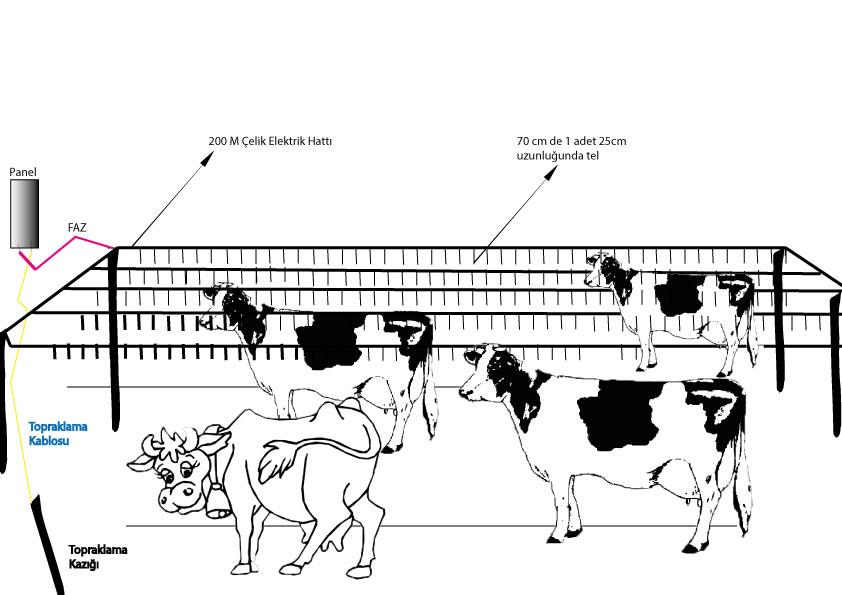 Elektrikli çit ile büyükbaþ çiftlik korumasý