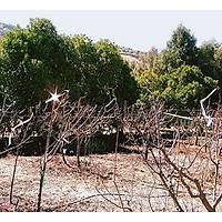 Bird-x irri-Tape 550 m2 Kuş Kovucu 7,5 mt Şerit