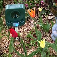 Bird-x Solar Yard Gard Kedi Köpek Kovucu