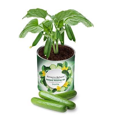 Organik Salatalýk Yetiþtirme Kiti - Growing Kit