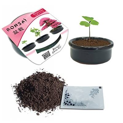 Bonsai Bitki Yetiştirme Kiti - Grow It Bonsai