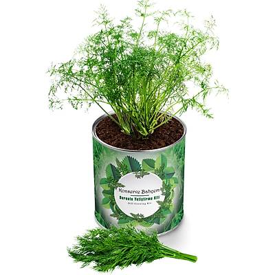 Organik Dereotu Yetiþtirme Kiti - Growing Kit