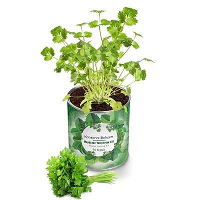 Organik Maydanoz Yetiştirme Kiti - Growing Kit