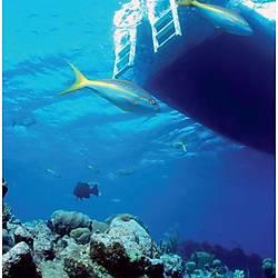 Double Deck Snorkel Dalýþ Sistemi
