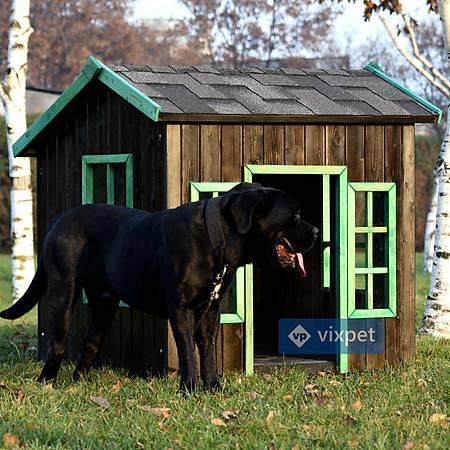 Oxford Pencereli Köpek Kulübesi 100x100x110