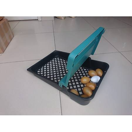 Plastik Tavuk Folluklarý