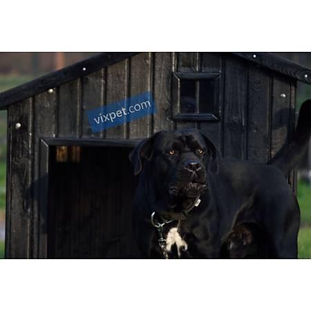 Karaev Köpek Kulübesi
