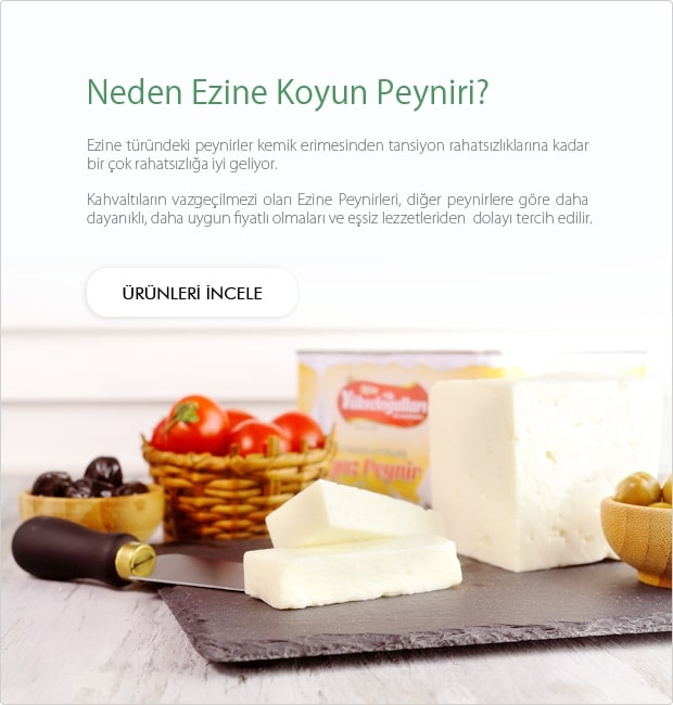Ezine Koyun Peyniri