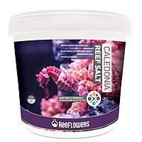Reeflowers - Caledonia ReeF Salt Tuz 22 kg