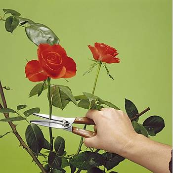 Victorinox 6.5009 Çiçek & Üzüm Toplama Makasý