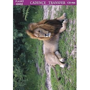 Cadence T-944 25 X 35 cm Kolay Transfer