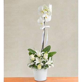 Tek Dal Seramikte Beyaz Orkide Ve Kazablanka