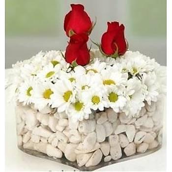 Papatya Gül Çiçek Aranjmaný