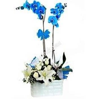 Çift Dal Seramikte Mavi Orkide Ve Kazablanka çiçekleri