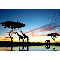 DL 4257 Zürafa Görünümlü Duvar Posteri