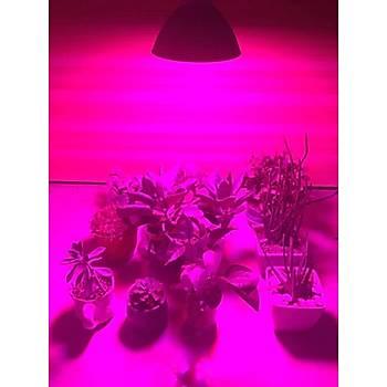 Tam Spektrum 500 Led 50W Bitki Büyütme Hidroponik Aydýnlatma