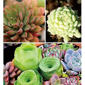 Tam Spektrum 80 Led Bitki Çiçek Büyütme Hidroponik Aydýnlatma
