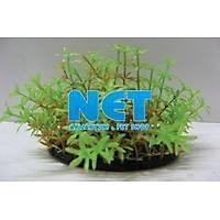 Langhu Plastik Akvaryum Bitki 9 cm