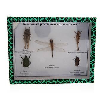 Zararlý Zirai Böcekler