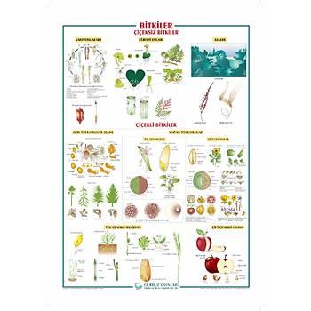 Bitkiler 70x100 cm