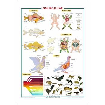 Omurgalýlar 70x100 cm