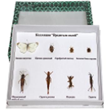 Böcek Çeþitleri