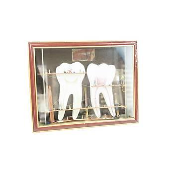 Endodonti Diþ Model Led Iþýklý Çerçeve