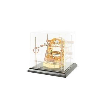 Cam Fanus Büyük Köklü Çene Modeli