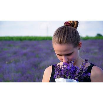 Doðal Lavanta Demeti Natural Lavender Bundle 20 Adet 200-300 Dal