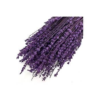 Þoklanmýþ Doðal Lavanta Demeti Lavender Bundle Ýstanbul Moru 40-50