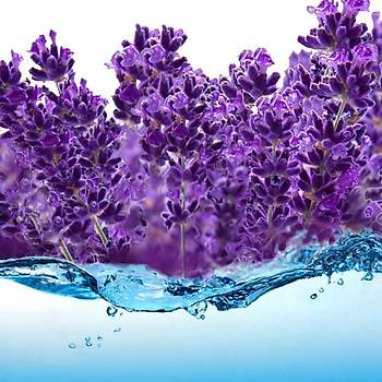 Lavendrose Lavanta Suyu 200 Ml Lavender Water