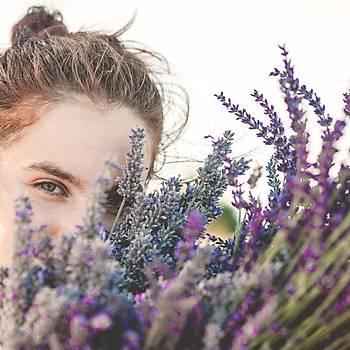 Doðal Lavanta Demeti Natural Lavender Bundle 10 Adet 200-300 Dal