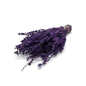 Þoklanmýþ Doðal Lavanta Demeti Natural Lavender Bundle Mor 40-50 Cm