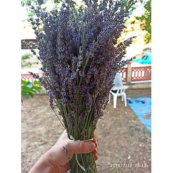 Doðal Lavanta Demeti Natural Lavender Bundle 3 Adet 200-300 Dal