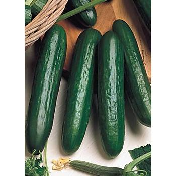 Salatalýk Tohumu - Beith Alpha F1 - Farklý Gramajlarda