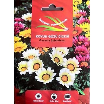 KOYUN GÖZÜ Çiçek Tohumu - Gazanya