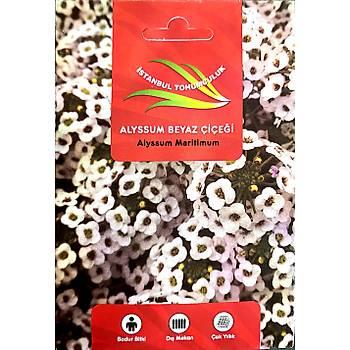 Alyssum Beyaz Çiçek Tohumu - Bol Kokulu