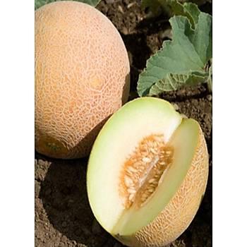 Ananas Kavun Tohumu - Farklý Gramajlarda
