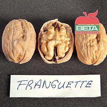 FRANGUETTE Ceviz Fidaný