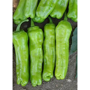 Biber Tohumu - Mazamort (ÜÇBURUN) -  - 10gr / 25 gr / 100 gr ve 500 gr Seçenekleriyle