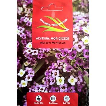 Alyssum Mor Çiçek Tohumu - Bol Kokulu