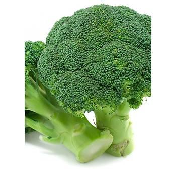 Rapid Brokoli Tohumu - 5gr
