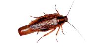 Bayer Maxforce Platin Hamam Böceği Jeli (20 Gr)