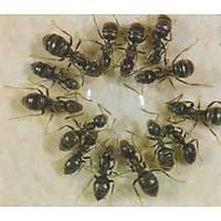 (30.gr) Bayer Maxforce Quantum Karınca Jel İlacı { Bir Adet Şırınga Jel Fiyatıdır }