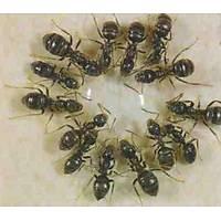 Fibro Karınca Jel İlacı (35.Gr)