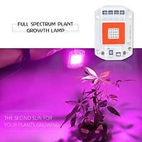 Tam Spektrum 50W 220V Yeni Nesil Bitki Büyütme Led Cob Çip