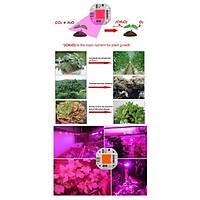 50 Watt Bitki Büyüme Lambasý LED COB Çip Full Spektrum Sera