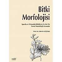 Bitki Morfolojisi Sporlu ve Tohumlu Bitkilerin Evrimi ile Temel Morfolojik Konular